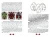с.28-29
